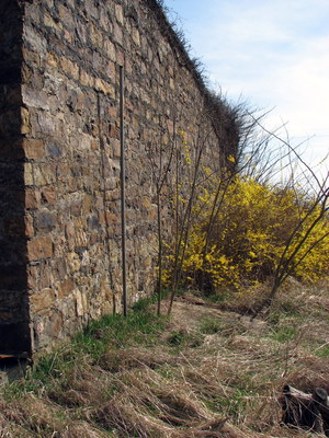 side of store with forsythia